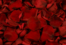 Preserved Rose Petals Dark Red