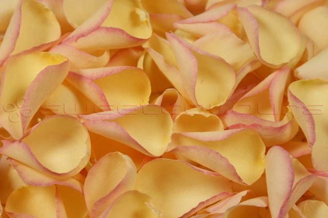 Freeze Dried Rose Petals Lemon Blush