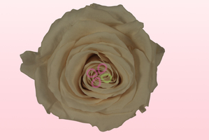 Product box preserved roses cream