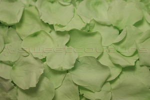 Preserved Rose Petals Mint Green