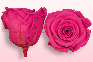 Product box rose amor  preserved roses  dark pink