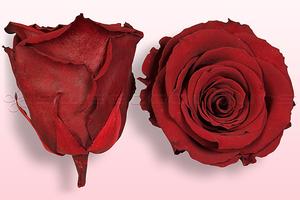 Roses conservées Rouge foncé