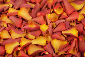Product box freeze dried rose petals  burnt orange r 8