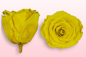 Product box rose amor  preserved roses  yellow