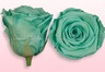 Preserved roses Turquoise