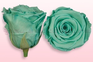 Product box rose amor  preserved roses  turquoise