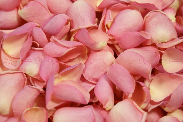 Freeze Dried Rose Petals Candy Pink