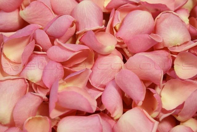 Petali Di Rosa Liofillizzati Di Colore Rosa Baby.