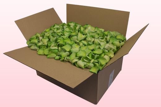 Caja de 24 litros con pétalos de rosa liofilizados de color verde manzana.