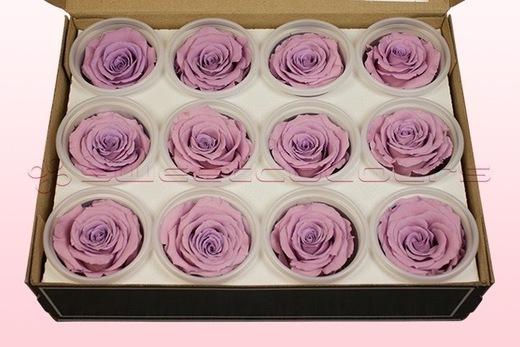 12 Têtes De Roses Conservées, Lavande pastel, Taille M