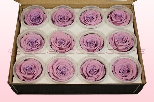 12 konservierte Rosenköpfe, Lavendel Pastell, Größe M