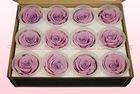 Final check rose amor preserved roses size m lavender