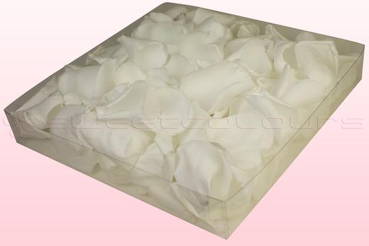 Emballage 1 litre pétales de roses conservés couleur blanc