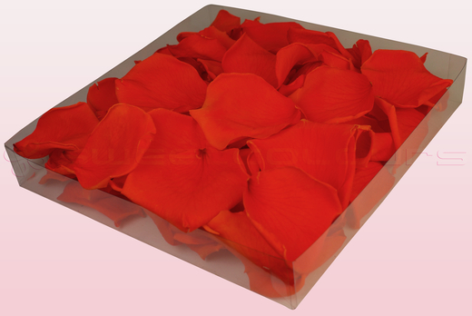 1 Litre Box Of Preserved Orange Rose Petals