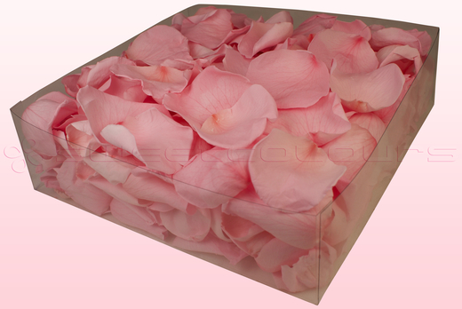 Confezione da 2 litri con petali di rosa stabilizzata di colore rosa chiaro.
