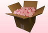 8 Litre box With Preserved Pale Pink Rose Petals