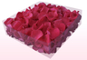2 Litre Box Of Preserved Fuchsia Rose Petals