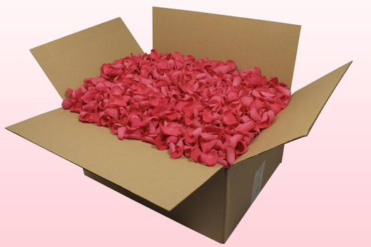 24 Litre box With Preserved Fuchsia Rose Petals