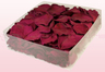 2 Litre Box Of Preserved Cerise Pink Rose Petals