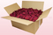 24 Litre box With Preserved Cerise Pink Rose Petals
