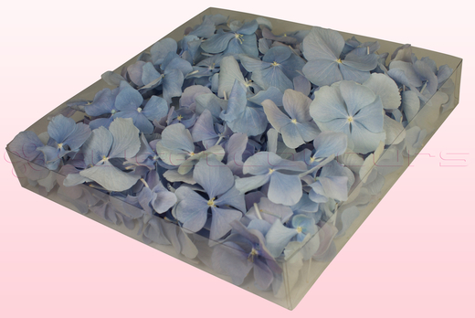 1 litre box with baby blue freeze dried hydrangea petals