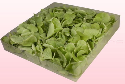 1 Litre Box Of Freeze Dried Green Hydrangea Petals