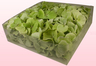 2 Litre Box Of Freeze Dried Green Hydrangea Petals
