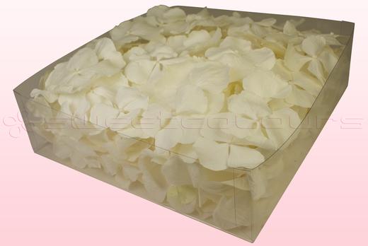 Envase de 2 litros con pétalos de hortensia liofilizados de color blanco.