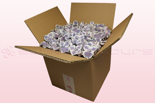8 litre box with lilac & white freeze dried hydrangea petals