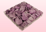 1 Litre Box Lavender Coloured Preserved Rose Petals