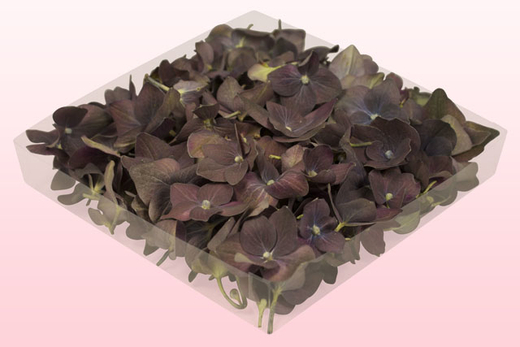 1 litre box with classic freeze dried hydrangea petals