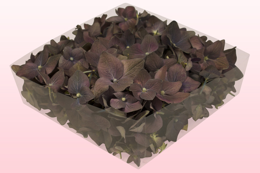 2 litre box with classic freeze dried hydrangea petals