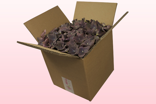 8 litre box with classic freeze dried hydrangea petals