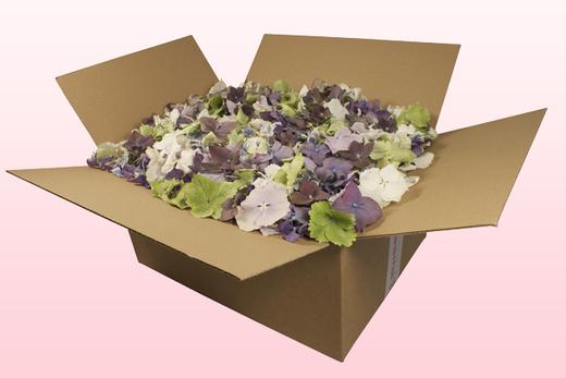 24 Liter Karton Mit Gemischte Hortensienblätter
