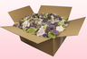 24 Litre Box With Mixed Hydrangea Petals