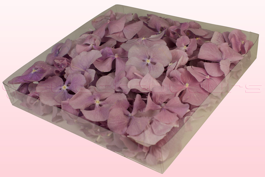 1 litre box with lilac freeze dried hydrangea petals