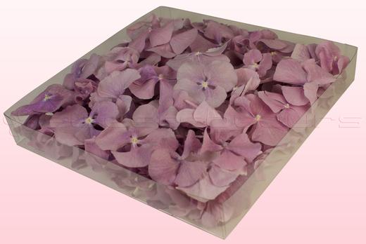 Confezione da 1 litro con petali di ortensia di colore lavanda.