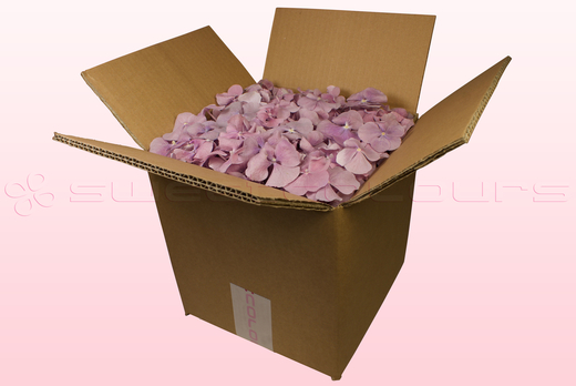 8 litre box with lilac freeze dried hydrangea petals