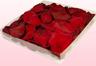 1 Liter Doos Geconserveerde Rozenblaadjes In De Kleur Donkerrood