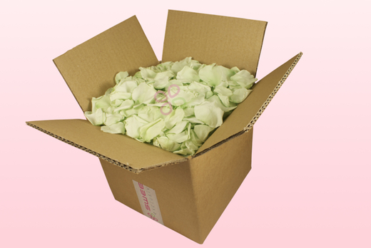 8 Litre box With Preserved Mint Green Rose Petals