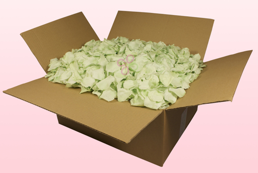 24 Litre Box With Mint Green Preserved Rose Petals