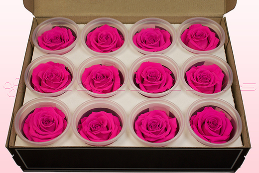 12 Rose Stabilizzate, Rosa Scuro, Taglia M