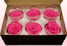 6 Preserved Rose Heads, Dark Pink, Size L