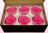 6 Rose Stabilizzate, Rosa Scuro, Taglia L