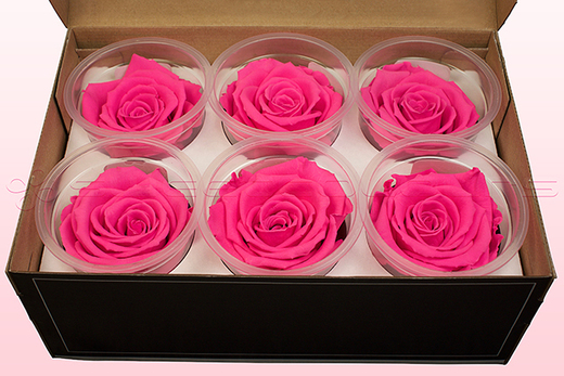 6 Preserved Rose Heads, Dark Pink, Size XL
