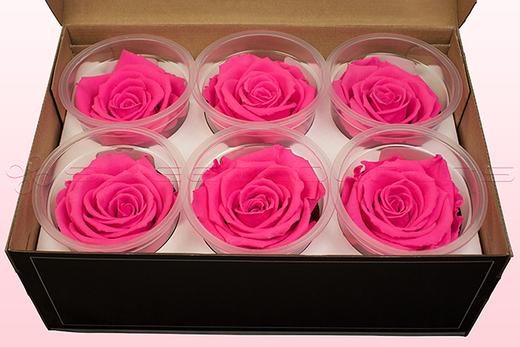 6 Rose Stabilizzate, Rosa Scuro, Taglia XL