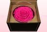 1 Geconserveerde Roos, Donkerroze, Maat XXL