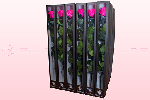 30 Preserved Roses With Stem, Dark Pink, Size XL.