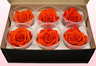 6 Preserved Rose Heads, Orange-Yellow, Size XL