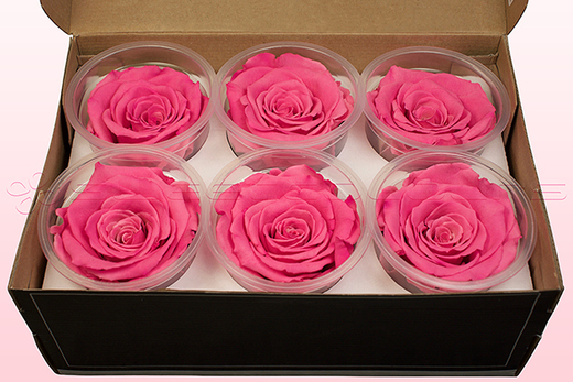 6 Preserved Rose Heads, Dark Pink-White, Size XL